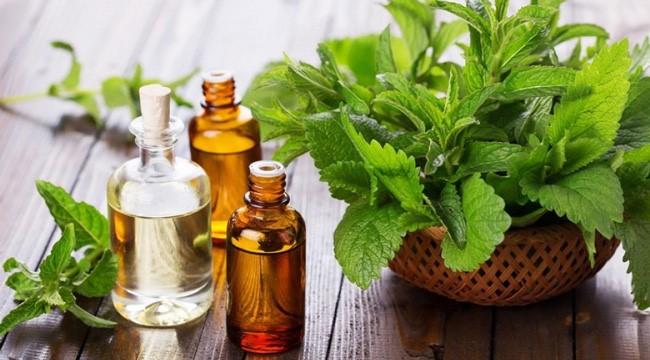 Tinh dầu Organic được đánh giá cao bởi sự nguyên chất