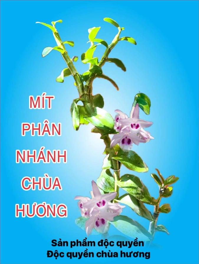 Mít phân nhánh chùa Hương sản phẩm độc quyền của Chùa Hương
