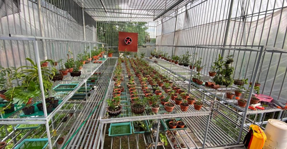 Chăm sóc vườn lan đột biến 80 tỷ